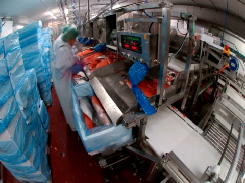 vídeos de stock e filmes b-roll de t/l workers processing caught salmon, japan - amanhar o peixe