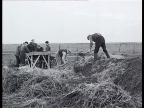 1942 b/w workers processing potatoes, the potatoes are shipped on goods trains and horse-and-cart / netherlands - raw potato stock videos & royalty-free footage