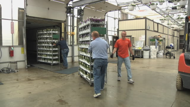 slo mo ws zi workers pushing racks with potted plants into loading dock at commercial greenhouse, carleton, michigan, usa - 園芸学点の映像素材/bロール