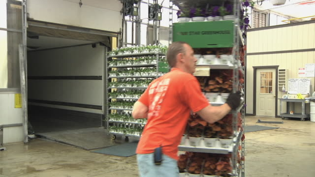 slo mo ws workers pushing racks with potted plants into loading dock at commercial greenhouse, carleton, michigan, usa - 園芸学点の映像素材/bロール