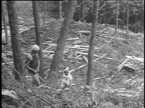 workers sawing tree / workers harvesting lumber / felled trees on hillside - anno 1947 video stock e b–roll