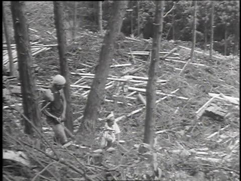 workers sawing tree / workers harvesting lumber / felled trees on hillside