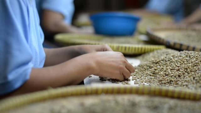 vídeos de stock, filmes e b-roll de ms workers select raw coffee beans at taman delta indonesia coffee factory in semarang indonesia on thursday march 12 ms workers hands select raw... - controlo de qualidade