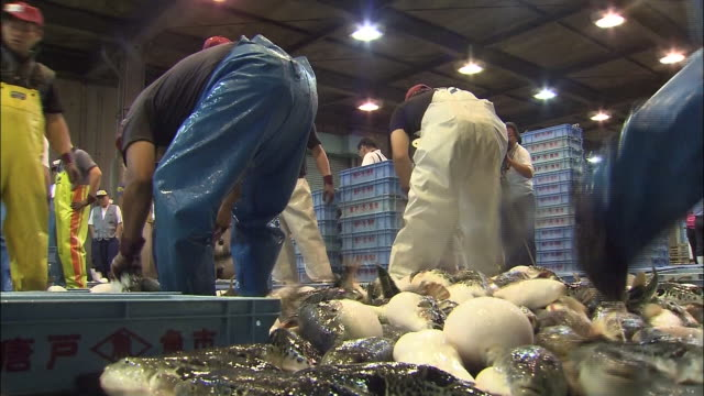 Workers sort giant piles of blowfish at Haedomari Market in Shimonoseki, Japan.