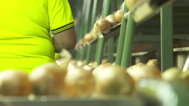 Workers sorting onions moving on conveyor belts at processing warehouse