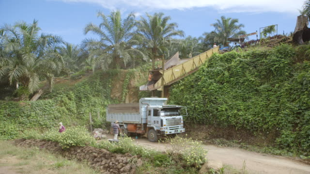 ws workers transferring harvested oil palm fruit into waiting truck / tawau, sabah, malaysia - sabah state stock videos and b-roll footage