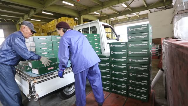 workers unload boxes of decopons a japanese citrus fruit from a truck at an agricultural cooperative on gogo island in matsuyama ehime prefecture... - agricultural cooperative stock videos and b-roll footage