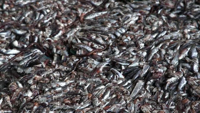 workers unload crates of anchovies at mijo port in namhae south korea on tuesday april 19 cu freshly caught anchovies buyers and workers stand near... - anchovy stock videos & royalty-free footage
