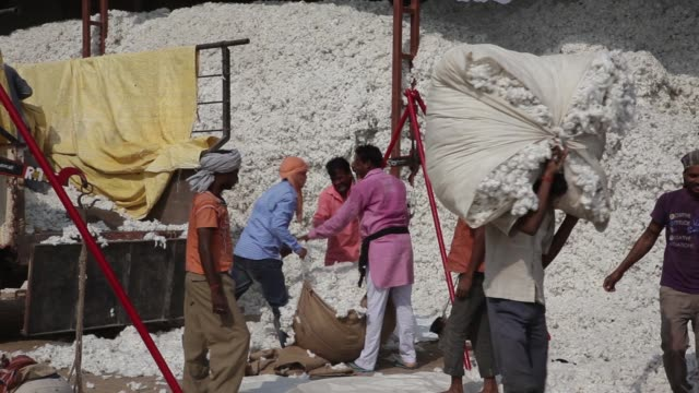 vídeos y material grabado en eventos de stock de workers unload, weigh and sort cotton at a ginning mill in pilibanga, rajasthan, india, on wednesday, nov 5 workers unload and weigh cotton, a worker... - tierra cultivada