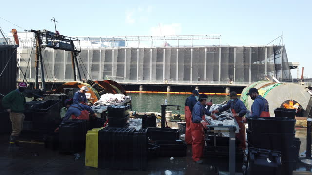 workers wearing face mask separating and packing fish at the fish pier in boston amid the 2020 global coronavirus pandemic. - quality control stock videos & royalty-free footage