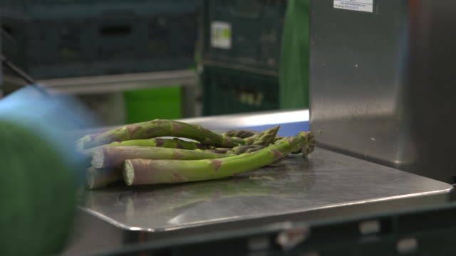 workers weighing asparagus spears in plant, uk - scales stock videos & royalty-free footage