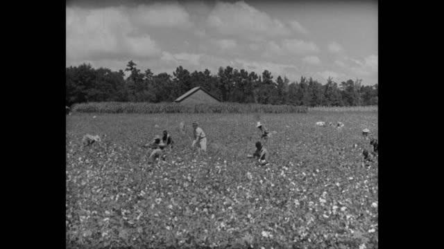 workers working in cotton field,  usa - cotton stock videos & royalty-free footage