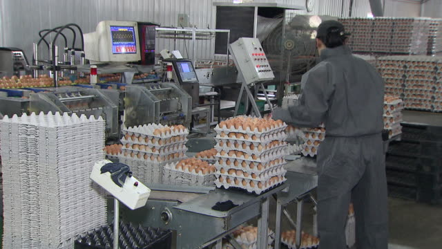 vídeos de stock, filmes e b-roll de ms workers working in egg factory / anseong, gyeonggi-do, south korea - indústria de comida e bebida
