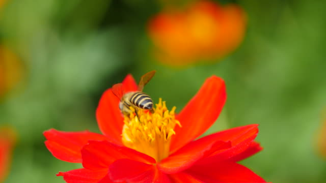 Working bee on flower.