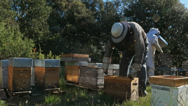 vidéos et rushes de working beekeepers, occitanie, europe, france - abeille