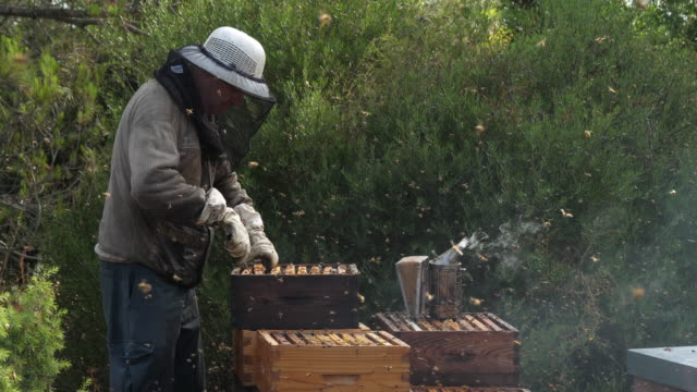 vídeos y material grabado en eventos de stock de working beekeepers, occitanie, europe, france - anatomía