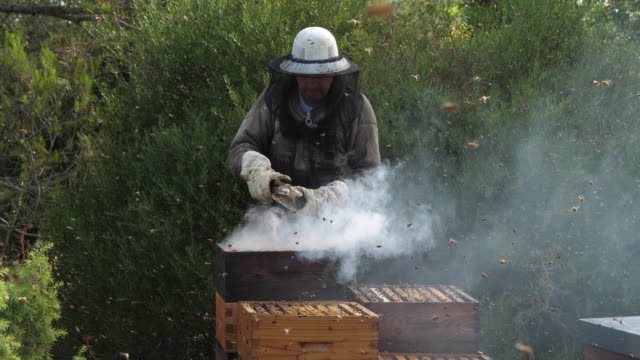 vidéos et rushes de working beekeepers, occitanie, europe, france - miel