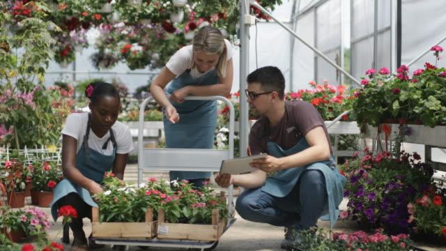vídeos de stock e filmes b-roll de working in a garden center - florista