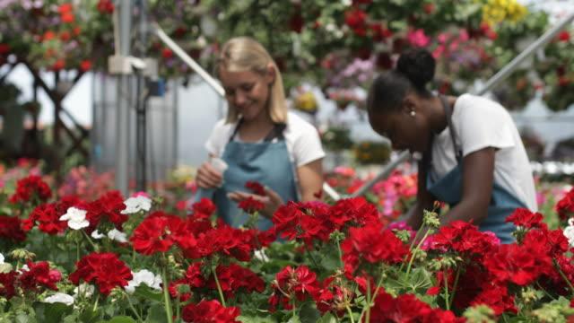 working in a garden center - centro per il giardinaggio video stock e b–roll