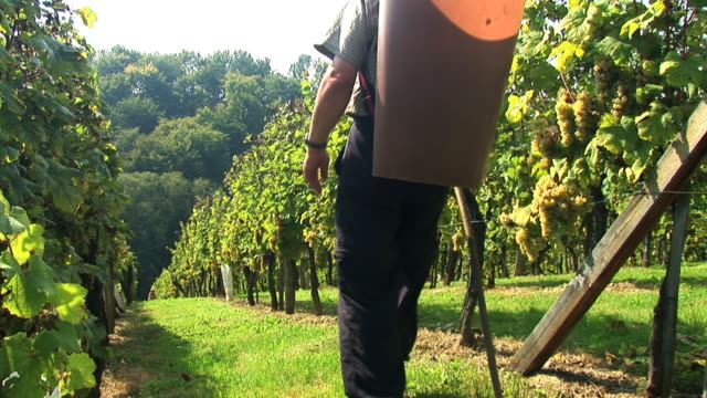 hd: working in the vineyard - grape stock videos & royalty-free footage
