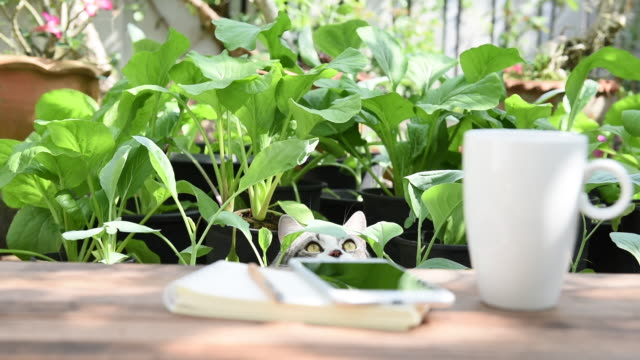 working outdoor in vegetable garden with a cat, smart phone, notebook and coffee cup in morning - natural condition stock videos & royalty-free footage