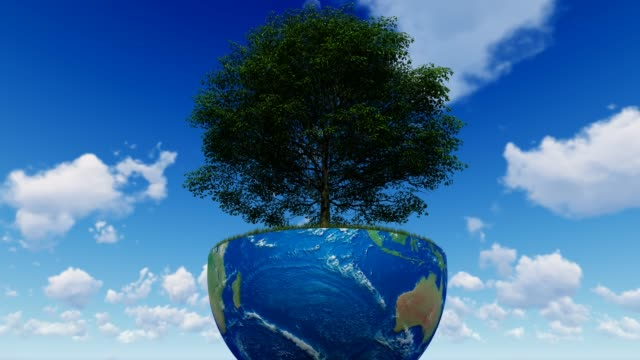 world forestry day - harmony stock videos & royalty-free footage