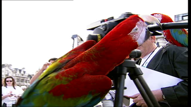 trafalgar square event itn england london trafalgar square trafalgar square tilt down crowd of people gathered for world parrot day event cms blue... - downing street stock videos and b-roll footage