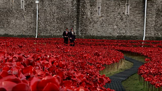 World War One Centenary Armistice Day commemorations ENGLAND London Tower of London EXT Various shots reporter along through poppies with Captain...