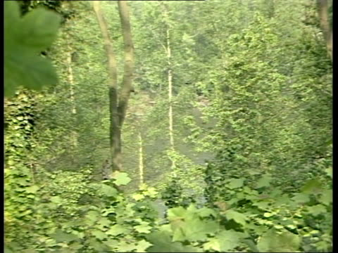vidéos et rushes de world wide fund for nature surrey ockley ms deciduous trees in forest zoom in ms daddy long legs insect on leaf costa rica tgv tropical trees plants... - bûcheron