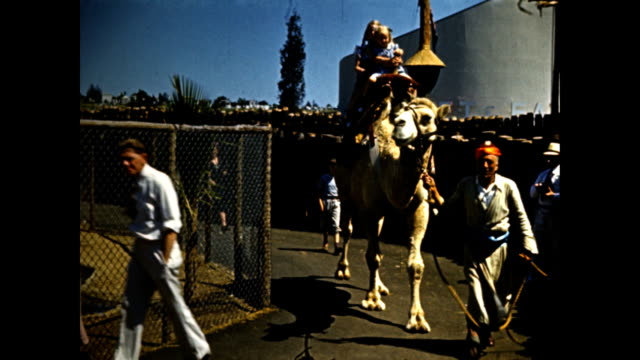 world's fair children man with camera taking camel rides led by man dressed in an arabian costume / exotic bird / exterior nature's mistakes exhibit... - exhibition stock videos & royalty-free footage
