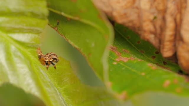 Worm eating leaf
