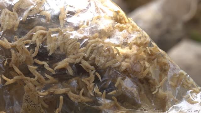 ワームの袋に - ビニール袋点の映像素材/bロール