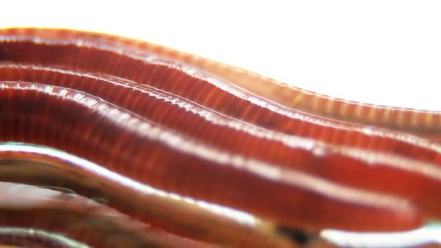 Worms-Textfreiraum, Makros, HD