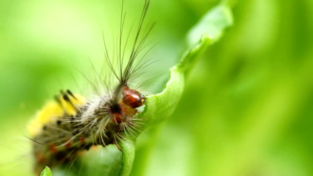 vídeos de stock, filmes e b-roll de os sem-fins comem vegetais verdes - larva