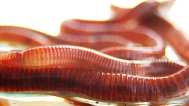 vídeos de stock, filmes e b-roll de worms-macro, em hd - grupo médio de animais