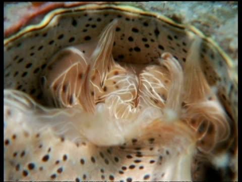 vídeos y material grabado en eventos de stock de cu wormsnail reeling in mucous, possibly serpulorbis grandis or dendropoma maxima - molusco