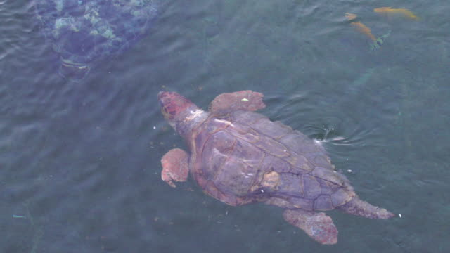 wounded sea turtle - injured stock videos & royalty-free footage