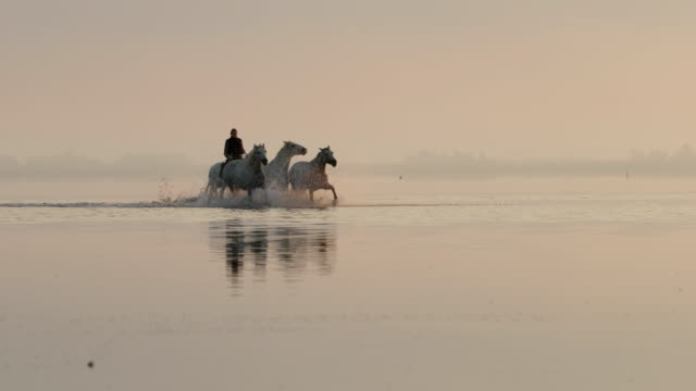 wrangler riding by horses in sea against sky during sunset - camargue, france - silhouette stock videos & royalty-free footage