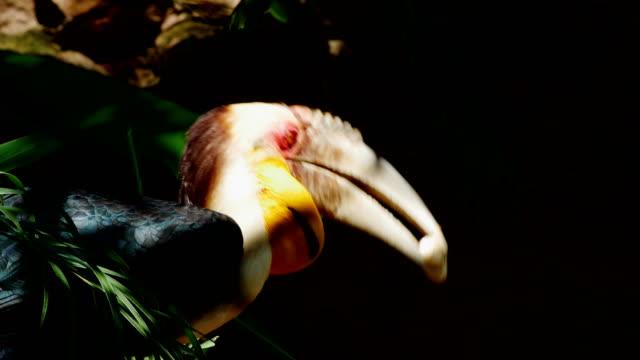 stockvideo's en b-roll-footage met het kransenvogeleten - dierlijke mond