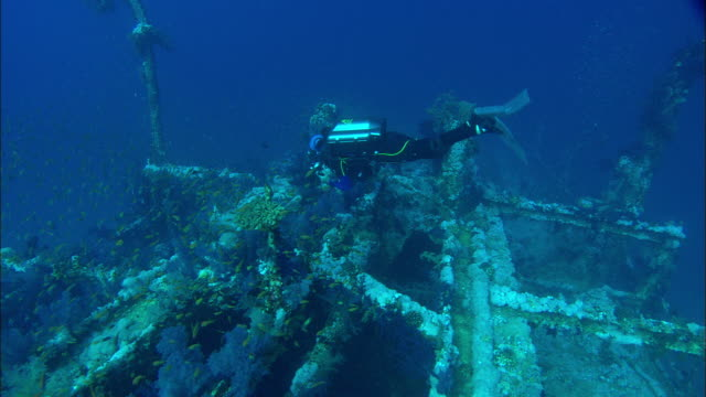 wreck dive, egypt, red sea  - shipwreck stock videos and b-roll footage