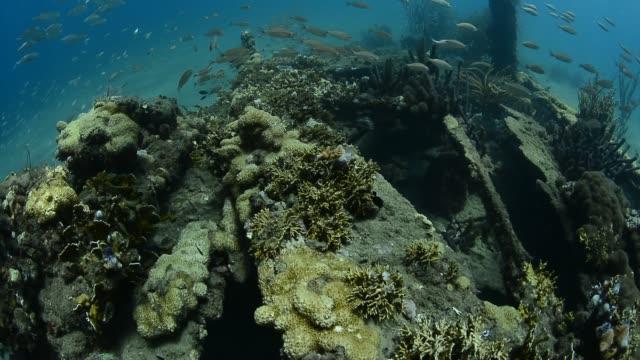 wreck diving. - 水中カメラ点の映像素材/bロール