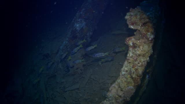 wreck sea of umbria, red sea, sudan. - 1935 stock videos & royalty-free footage