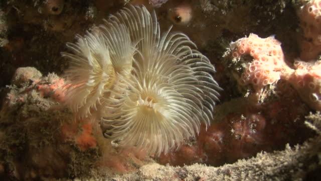 stockvideo's en b-roll-footage met wreckage tubes. channel islands, british waters - kanaaleilanden engeland