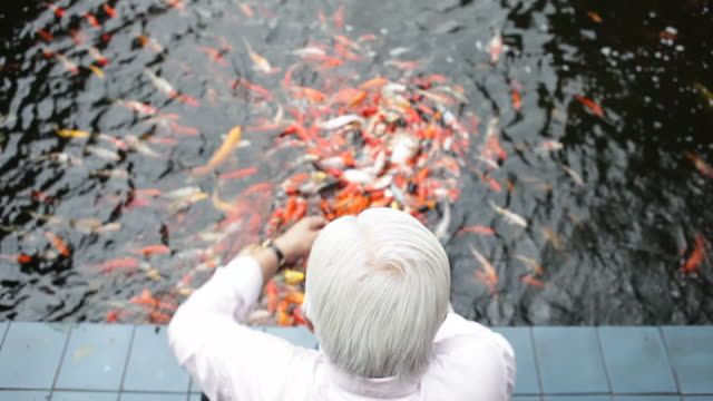 w/s rear view of mature man feeding fish in pond  man in focus - koi carp stock videos & royalty-free footage