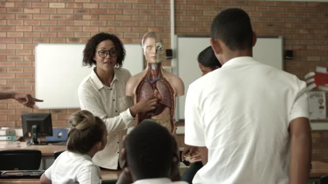 vídeos y material grabado en eventos de stock de ws_teacher teaching in biology class, using torso - torso