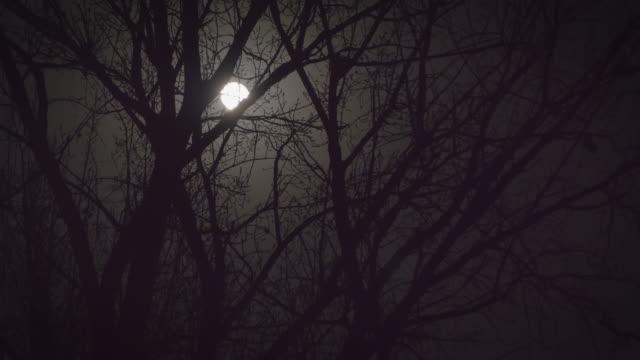 WSÊFull moon at night, Beijing, China