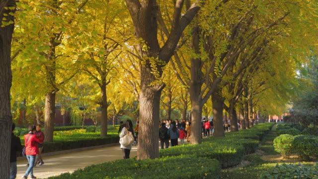 wsêpeople walking in park nearêyongheêtemple, beijing, china - lamasery stock videos and b-roll footage