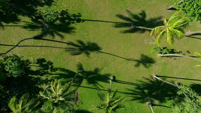 wss coastline of tahiti, french polynesia - french polynesia stock videos & royalty-free footage