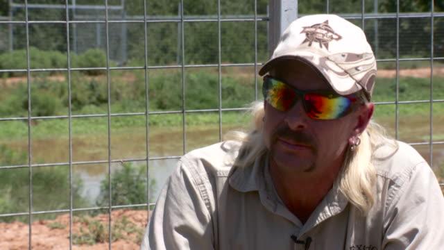 vídeos y material grabado en eventos de stock de wynnewood, oklahoma, u.s.- interview with joe schreibvoge at gw exotic animal park on may 16, 2012. earlier that week, the gw animal park in... - felino grande