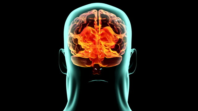 X-ray 360 degree brain inside body. Medical video background.